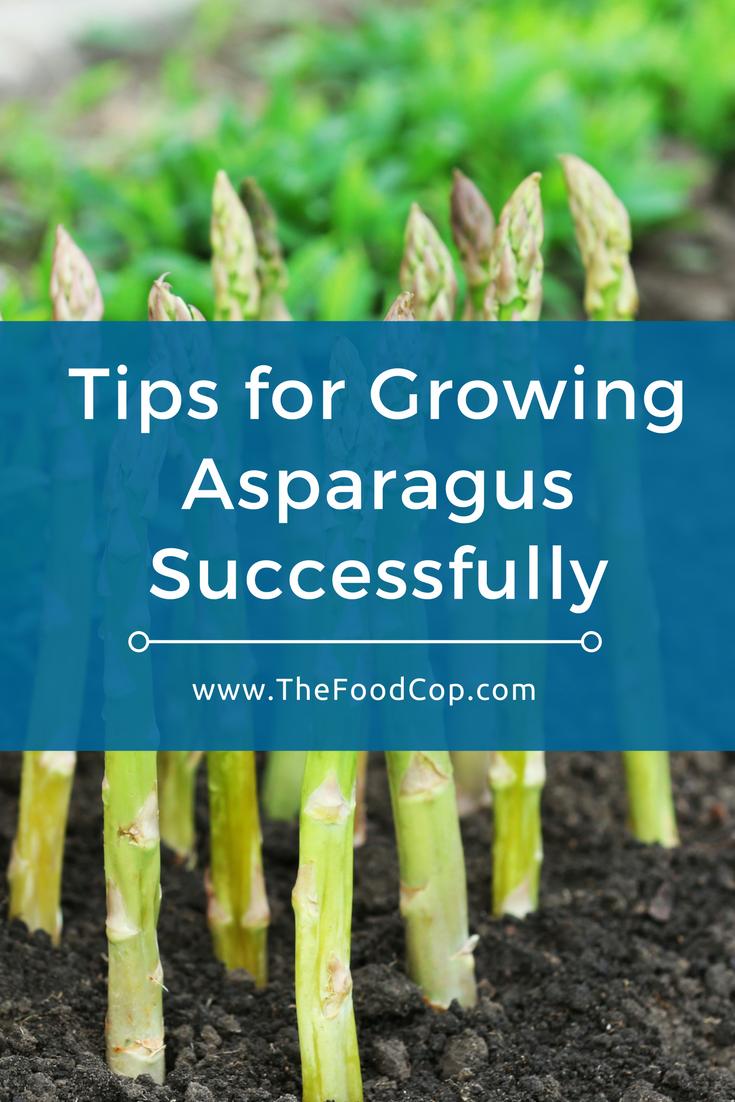 asparagus | growing asparagus | The Food Cop