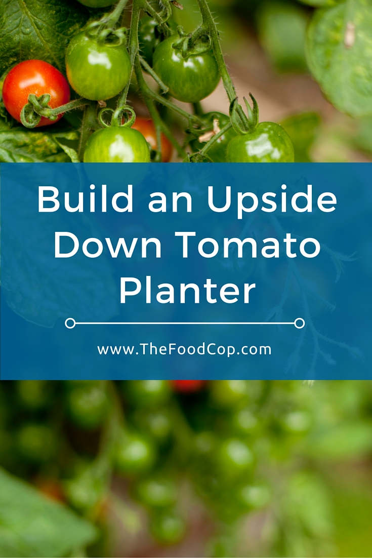 Learn how to easily build an upside down tomato planter. Click to read more.