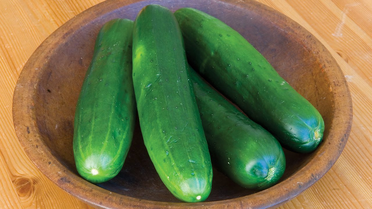 Growing A Cucumber Patch The Food Cop