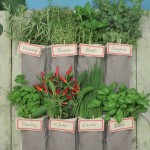 Make a Vertical Garden Using a Shoe Organizer